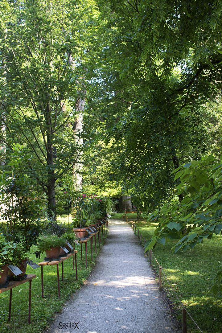 Orto Botanico di Padova: uno dei viali dell'Orto