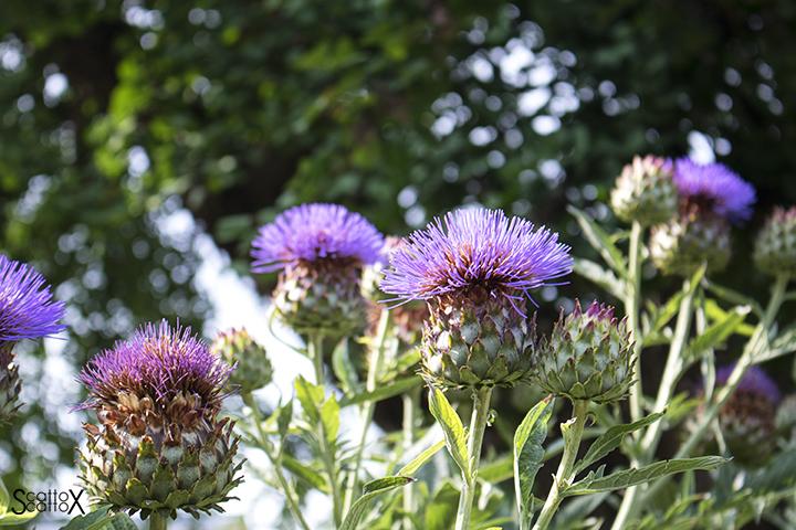 Orto Botanico di Padova: varietà di fiori