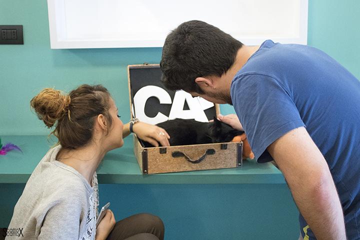 Una giornata a Milano: coccole al Crazy Cat Café