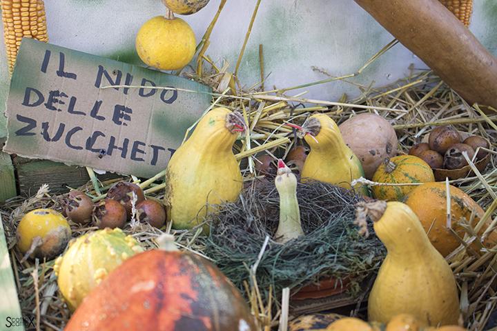 Garden Cavinato: un bel carico di zucche!