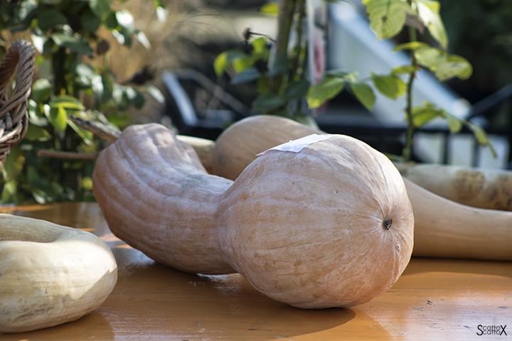 Garden Cavinato: zucche in concorso