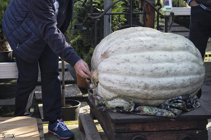 Garden Cavinato: la zucca più grande del concorso