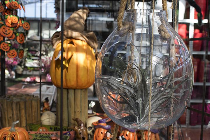 Garden Cavinato: allestimento di Halloween