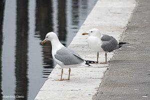 Passeggiando per Chioggia (in una grigia e fredda domenica…)