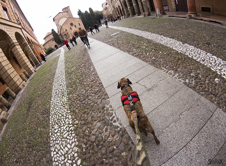 A Bologna con Tigro