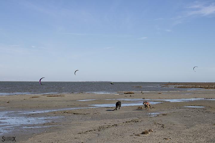La spiaggia della Boschettona: Tigro e Poldo che giocano