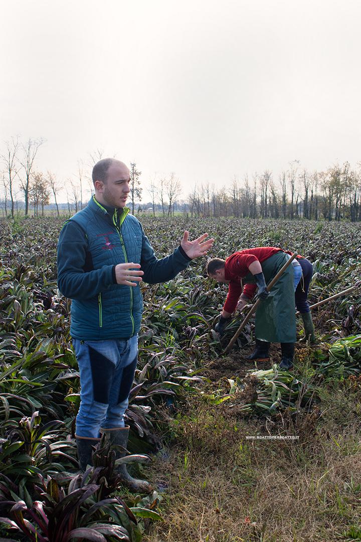 Radicchio rosso di Treviso IGP: Stefano Dotto ci spiega la lavorazione a partire dal campo