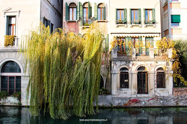 Treviso