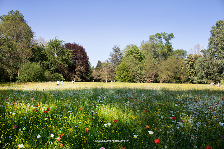 Giardinity a Villa Pisani Bolognesi Scalabrin