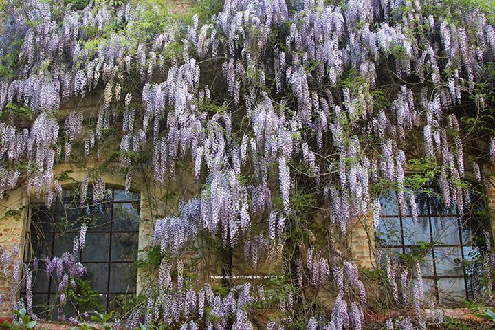 Giardinity - Villa Pisani Bolognesi Scalabrin - Il giardino