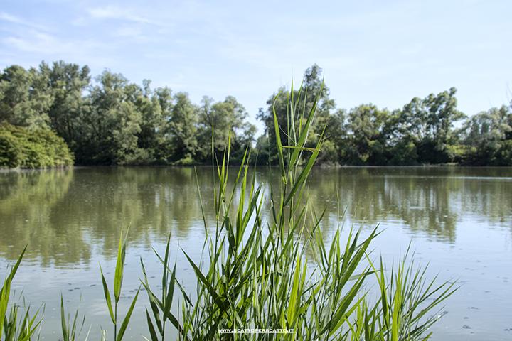 Parco dei Laghetti di Martellago: uno dei laghetti