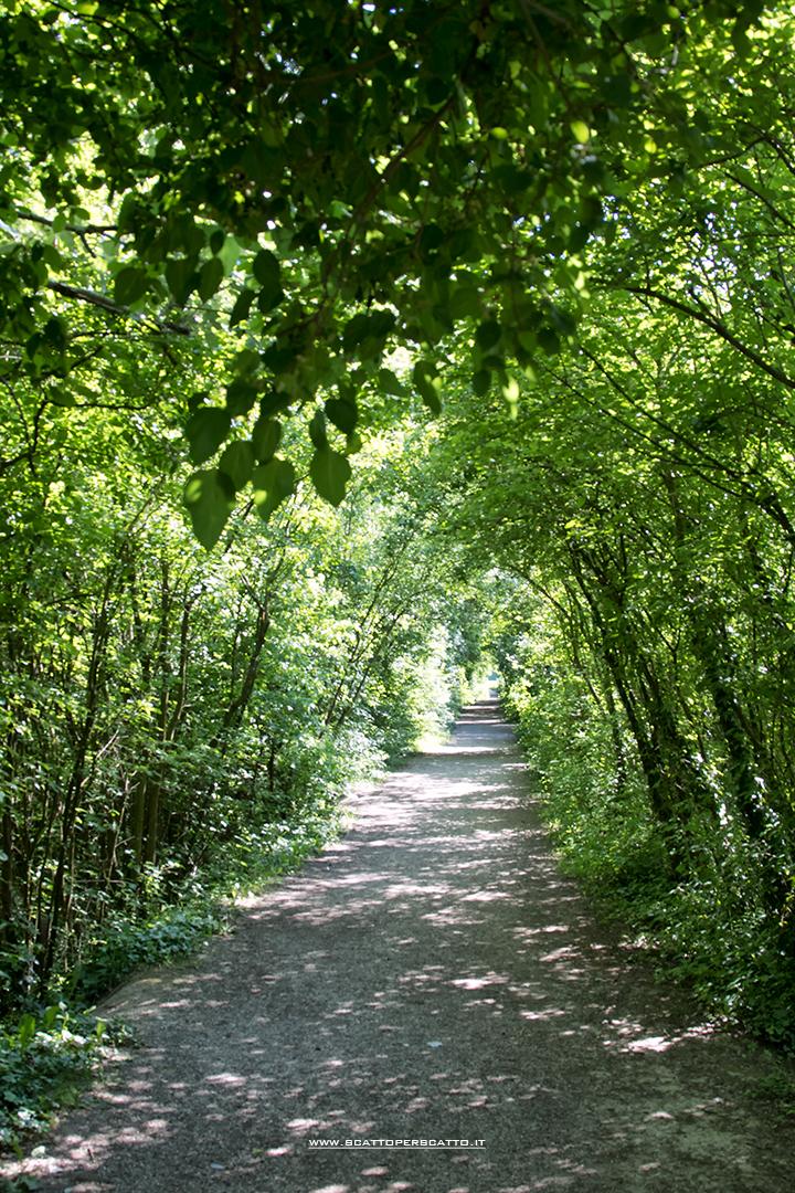 Parco dei Laghetti di Martellago: sentieri percorribili a piedi o in bicicletta
