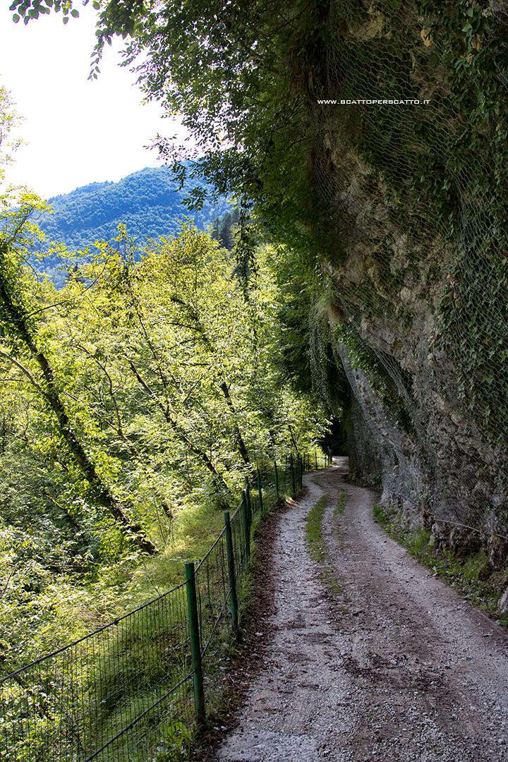 Lago del Corlo - Sentiero