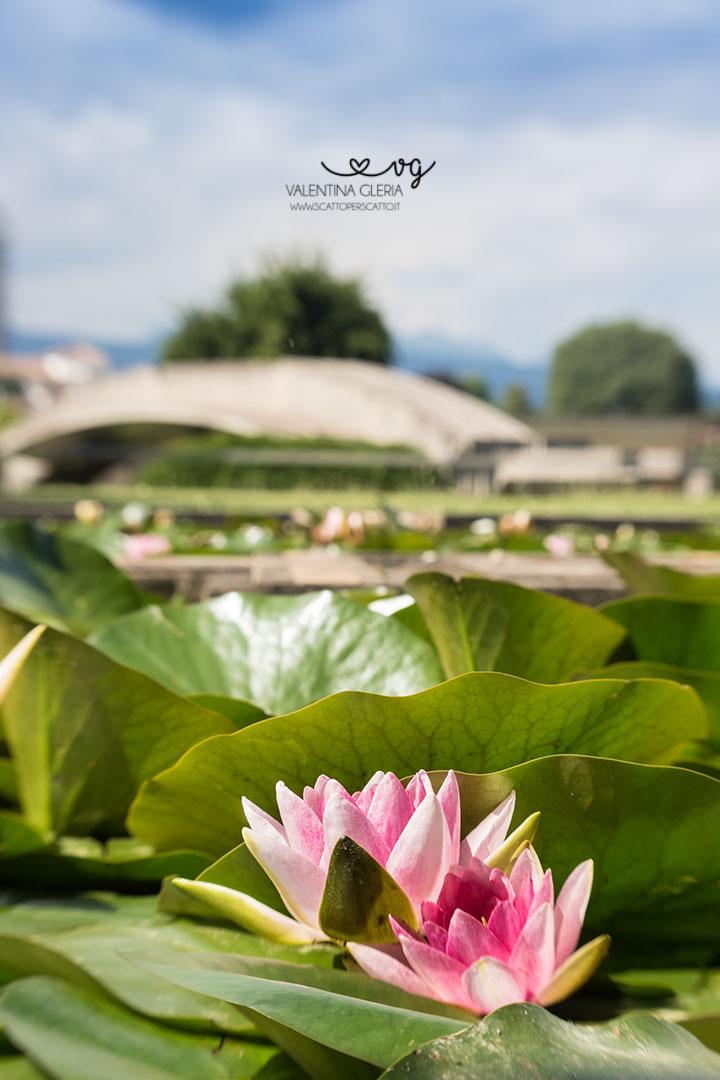 Tomba Brion: vista della vasca d'acqua e dei fiori